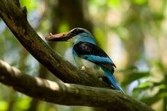 Exotische vogel royalty-vrije stock afbeeldingen