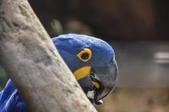 Exotische vogel bij Iguazu-Dalingen, Brazilië Stock Foto's