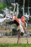Exotische vogel bij Iguazu-Dalingen, Brazilië Royalty-vrije Stock Foto's
