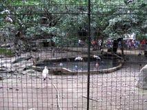 Exotische Vogels, de Dierentuin van Manilla, Manilla, Filippijnen Royalty-vrije Stock Fotografie