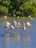 Exotische vogelszitstok bij zonsondergang Stock Foto