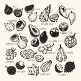 Exotische Vruchten, Reeks Royalty-vrije Stock Foto