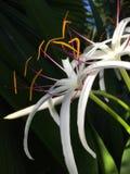 Exotische weiße Blume mit den orange und purpurroten Details stockfotos