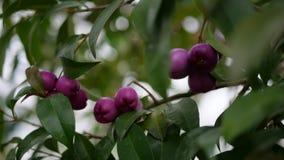 Exotische wild wachsende Pflanzen mit grünem Hintergrund Lizenzfreie Stockbilder