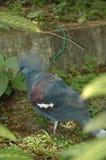 Exotische wilde vogel Stock Foto