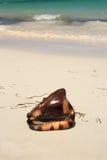 Exotische zeeschelp Royalty-vrije Stock Foto