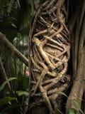 Exotischer Baum Stockfotos