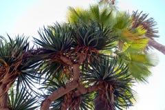 Exotischer Blumenstrauß von Palmen und Aloe stockfotos