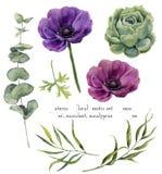 Exotischer Florenelementsatz des Aquarells Weinleseblatt-, -eukalyptus-, -Succulent- und -anemonenblumen lokalisiert auf Weiß Stockbilder