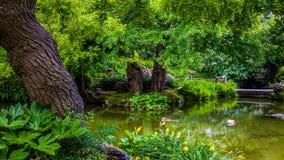 Exotischer Garten lizenzfreie stockfotos