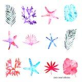 Exotischer handgemalter Satz auf dem weißen Hintergrund: Niederlassungen mit Blättern, Korallenriffe, Starfishes, tropische Anlag stockfotos