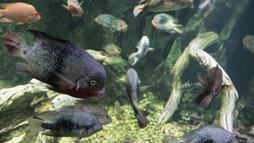 Exotischer Meeresfisch im Aquarium stock footage