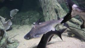 Exotischer Meeresfisch im Aquarium stock video