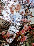 Exotischer Rahmen des heitren Baums und der rosa Blüten gegen Wolkenkratzer lizenzfreies stockbild