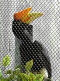 Exotischer schwarzer Vogel, der durch Zaun schaut stockfotografie