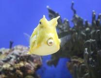 Exotischer Seefisch im Aquarium, Russland stockfotos
