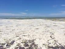 Exotischer Strand auf dem Indischen Ozean zanzibar Lizenzfreie Stockbilder