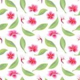 Exotischer tropischer Blumenhibiscus Frangipani und nahtloses Muster der gr?nen Bl?tter vektor abbildung