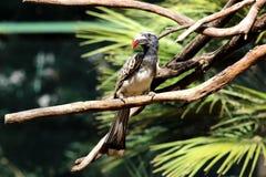 Exotischer Vogel stockfoto