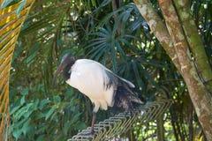Exotischer Vogel, der auf der Plattform aufwirft Lizenzfreies Stockfoto