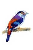 Exotischer Vogel des Aquarells Stockfoto
