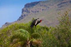 Exotischer Vogel im Flug Stockfotografie