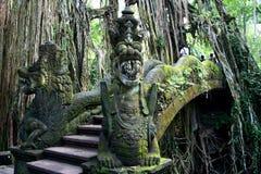 Exotischer Wald von Bali Stockfoto