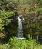Exotischer Wasserfall in Hawaii Stockfotografie