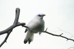 Exotischer weißer Vogel Stockfotografie