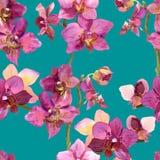 Exotisches Aquarell malte Schablone mit wiederholten Orchideenblumen Stockfoto