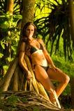 Exotisches Bikinibaumuster Stockbilder
