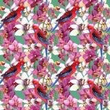 Exotisches Blumenmuster - plappern Sie Vogel, blühende Orchideenblumen nach Vektor Abbildung