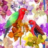 Exotisches Blumenmuster - plappern Sie Vogel, blühende Orchideenblumen nach Stock Abbildung