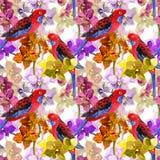 Exotisches Blumenmuster - plappern Sie Vogel, blühende Orchideenblumen nach Stockfotos