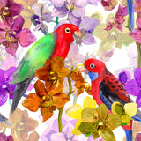 Exotisches Blumenmuster - plappern Sie Vogel, blühende Orchideenblumen nach Stockfotografie