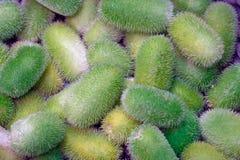 Exotisches Gemüse anguria stockfotografie