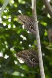 Exotisches großes buntes Schmetterlingsporträt Lizenzfreie Stockfotografie