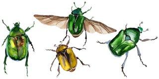 Exotisches Käfer bronzovka wildes Insekt in einer Aquarellart lokalisiert lizenzfreie abbildung