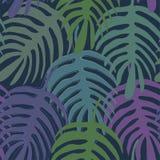 Exotisches Monstera-Liane-Blattschattenbild von Hand gezeichnet vektor abbildung