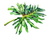 Exotisches Palmblatt Stockfotografie