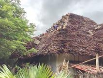 Exotisches Sansibar Stockbilder