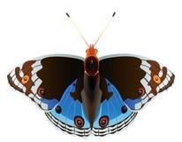 exotisk abstrakt fjäril vektor illustrationer