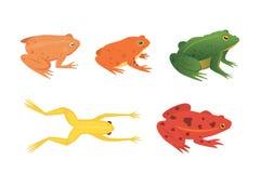 Exotisk amfibieuppsättning Grodor i den isolerade olika illustrationen för stiltecknad filmvektor Tropiska djur stock illustrationer