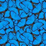 Exotisk blå bakgrund som göras av sammetblåttMorpho fjärilar, arkivfoto