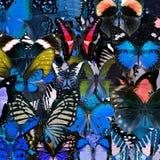 Exotisk blå bakgrundstextur vid sammanställningen av många smör Fotografering för Bildbyråer
