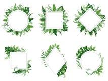 Exotisk bladram Våren lämnar kortet, tropiska trädramar och uppsättningen för vektor för djungel för tappning den blom- gränsen i vektor illustrationer