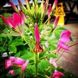 Exotisk blom fotografering för bildbyråer