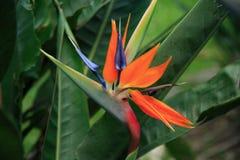 exotisk blomma royaltyfria bilder