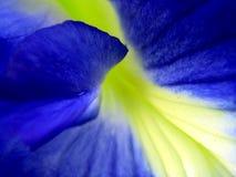 exotisk blomma Fotografering för Bildbyråer