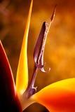 Exotisk blomma Royaltyfria Foton
